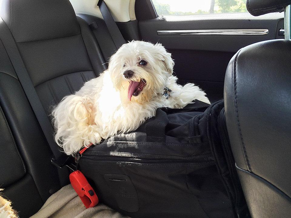 Spike on luggage